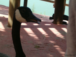 Drooling bird