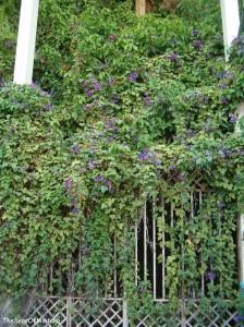 Mysterious Garden Torremolinos