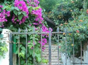 Mystery Garden Bajada de San Miguel