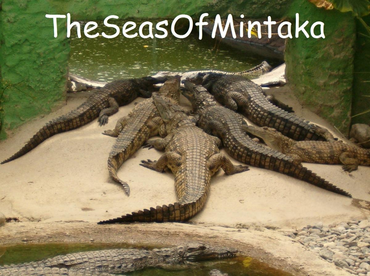 Hungry Crocodiles