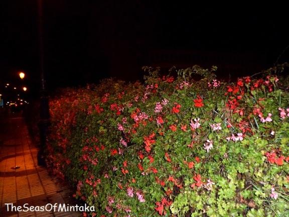 Flowers on the Bridge in Malaga