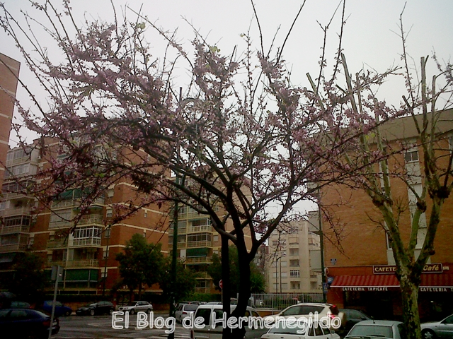 Almonds in the City
