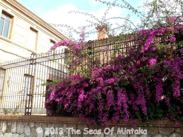 Purple Flowers in Provincial Prison
