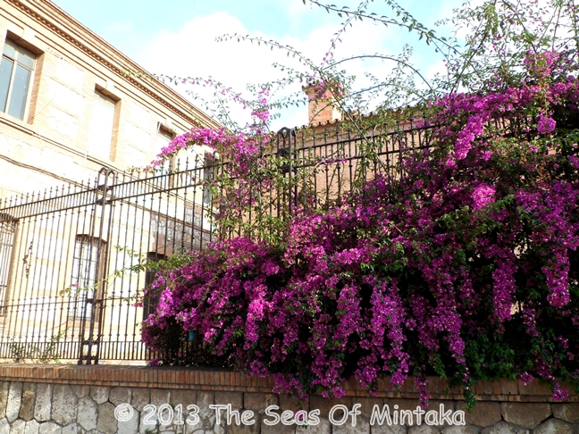 Purple Flowers in Provincial Prison