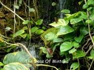 Butterflies and Waterfall