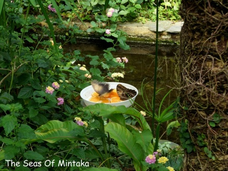 Butterflies Drinking Orange Nectar