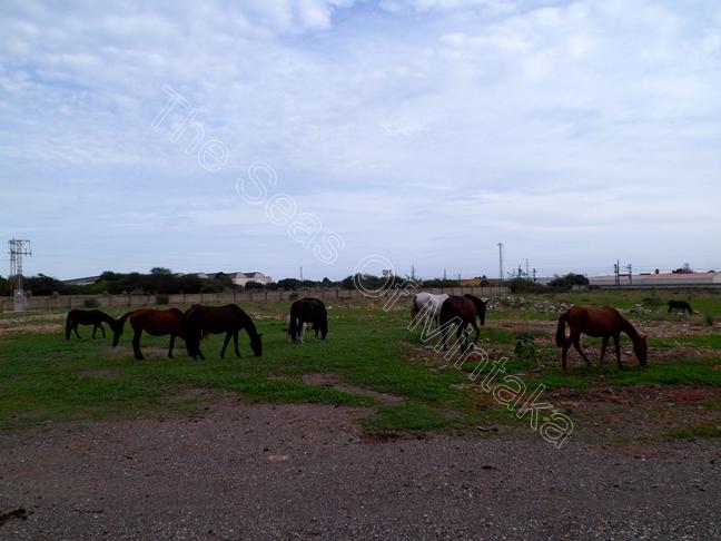 Horses El Tarajal Malaga