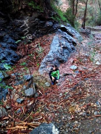 Ermenegildo in the Rainy Forest